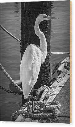 Great White Heron In Black And White Wood Print by Garry Gay
