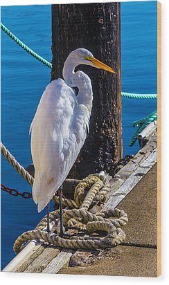 Great White Heron On Boat Dock Wood Print by Garry Gay