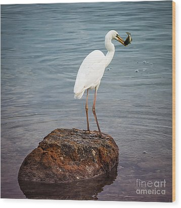 Great White Heron With Fish Wood Print by Elena Elisseeva