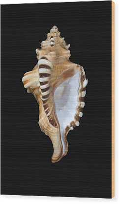Great White Tooth Wood Print by Dave Fleetham - Printscapes