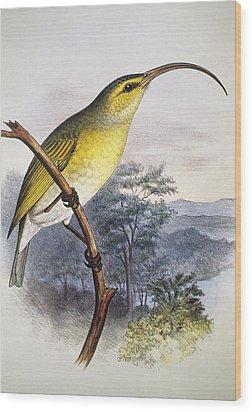 Greater Akialoa Wood Print by Hawaiian Legacy Archive - Printscapes