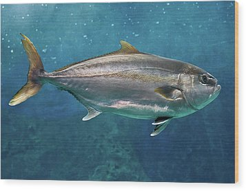 Greater Amberjack Wood Print by Stavros Markopoulos