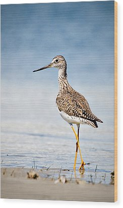 Wood Print featuring the photograph Greater Yellow Legs At Rachel Carson Estuarine Reserve by Bob Decker