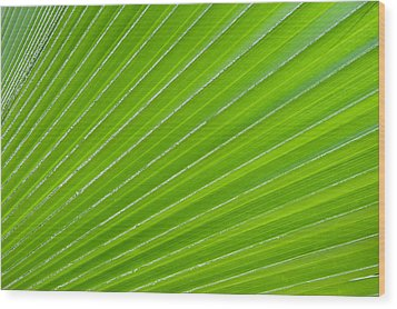 Green Abstract No. 1 Wood Print