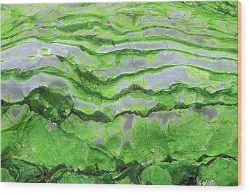 Green Algae Patterns On Exposed Rock At Low Tide, Gros Morne National Park, Ontario, Canada Wood Print by Altrendo Nature