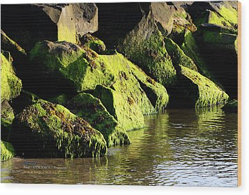 Wood Print featuring the photograph Green Algae by Paul SEQUENCE Ferguson             sequence dot net