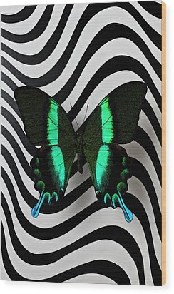Green And Black Butterfly On Wavey Lines Wood Print by Garry Gay