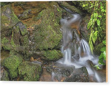 Wood Print featuring the photograph Green And Mossy Water Flow by James BO Insogna