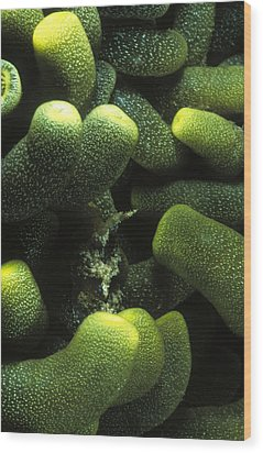 Green Anemone Column Aggregation Wood Print by James Forte