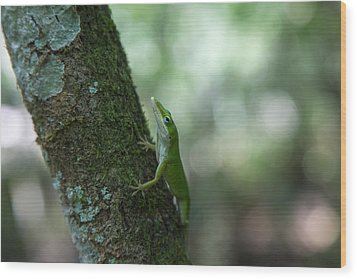 Green Anole Wood Print by Christopher L Thomley