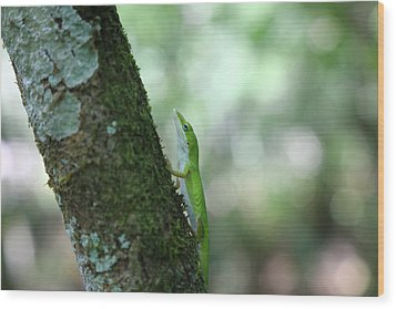 Green Anole Climbing Wood Print by Christopher L Thomley