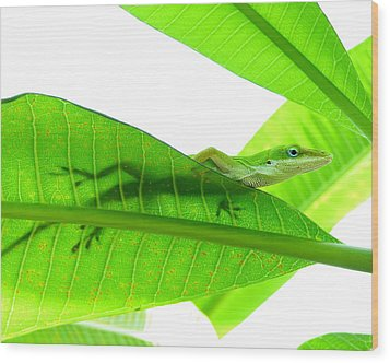 Green Anole On Leaf With Silhouette Wood Print by Joseph Connors