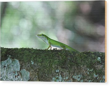 Green Anole Posing Wood Print by Christopher L Thomley