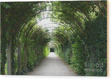 Green Arbor Of Mirabell Garden Wood Print by Carol Groenen