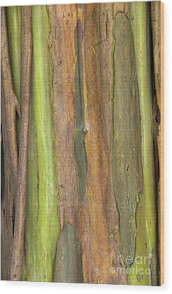 Wood Print featuring the photograph Green Bark 3 by Werner Padarin