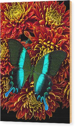 Green Blue Butterfly Wood Print by Garry Gay