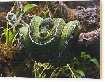 Green Boa Wood Print by Douglas Barnett