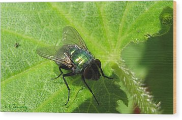 Wood Print featuring the photograph Green Bottle Fly by Maciek Froncisz