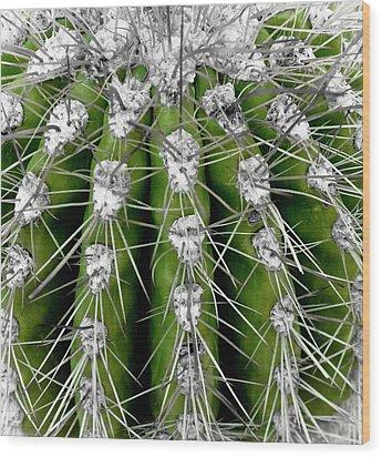 Green Cactus Wood Print by Frank Tschakert