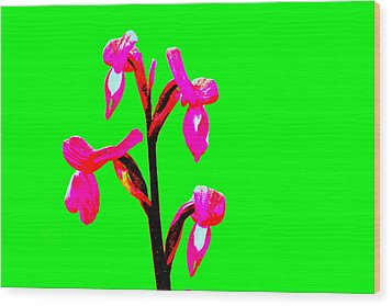 Green Champagne Orchid Wood Print