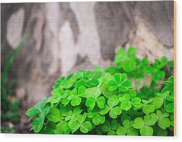 Green Clover And Grey Tree Wood Print by John Williams