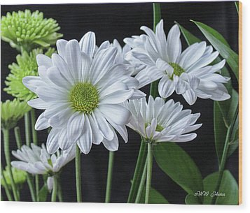 Wood Print featuring the photograph Green Eyed Daisy by Bonnie Willis