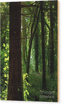 Green Forest Wood Print by Carlos Caetano