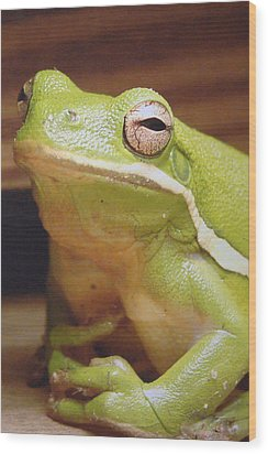 Green Frog Wood Print by J R Seymour