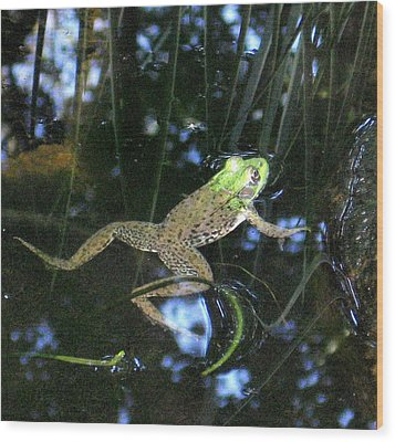 Wood Print featuring the photograph Green Frog by Patricia Januszkiewicz