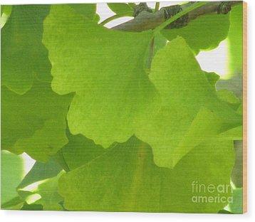 Green Ginkgo Wood Print