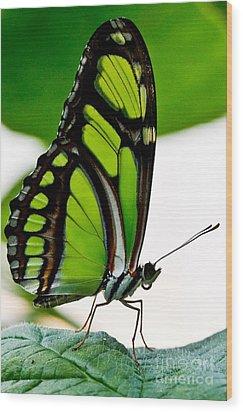 Green Goddess Wood Print by E Mac MacKay