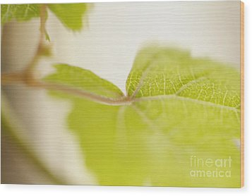 Green Grapevine Leaf Wood Print by Sami Sarkis