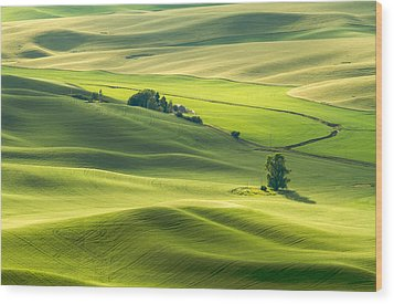 Wood Print featuring the photograph Green Green Grass Of Home by Patricia Davidson