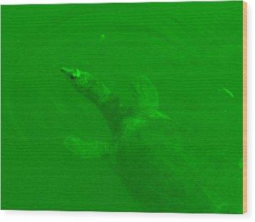 Green Hello Turtle Wood Print by Nela n Charlie Nelabooks