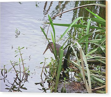 Green Heron Wood Print by Al Powell Photography USA