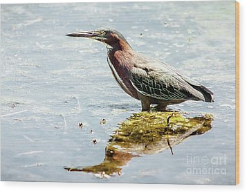 Wood Print featuring the photograph Green Heron Bright Day by Robert Frederick