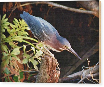 Green Heron Portrait Wood Print by Rose  Hill