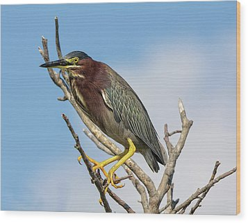 Wood Print featuring the photograph Green Heron by Robert Pilkington