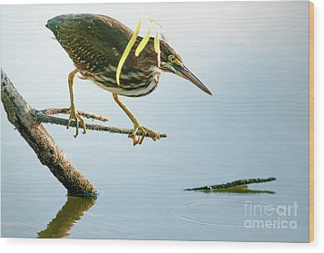 Wood Print featuring the photograph Green Heron Sees Minnow by Robert Frederick