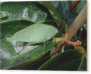 Wood Print featuring the photograph Green Insect by Suhas Tavkar