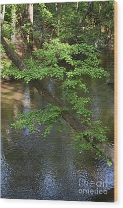 Wood Print featuring the photograph Green Is For Spring by Skip Willits