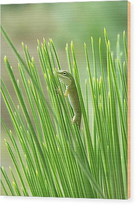 Wood Print featuring the photograph Green Is Good by Peg Urban