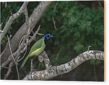 Green Jay Wood Print