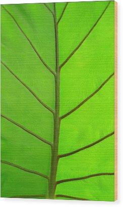 Green Leaf Wood Print by Marcus Adkins