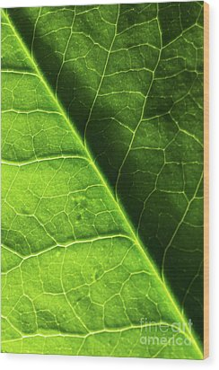 Wood Print featuring the photograph Green Leaf Veins by Ana V Ramirez
