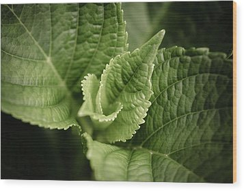 Wood Print featuring the photograph Green Leaves Abstract II by Marco Oliveira