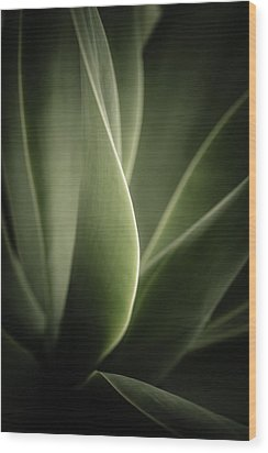 Wood Print featuring the photograph Green Leaves Abstract by Marco Oliveira