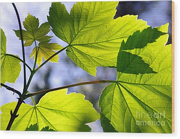 Green Leaves Wood Print by Carlos Caetano