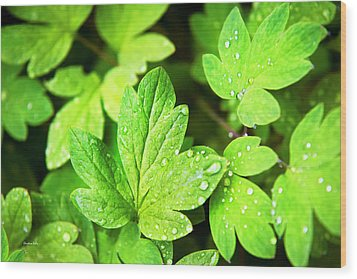 Wood Print featuring the photograph Green Leaves by Christina Rollo