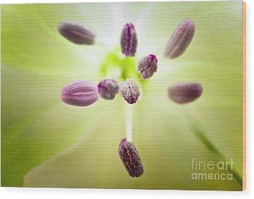 Green Light Flower Wood Print by Ryan Kelly